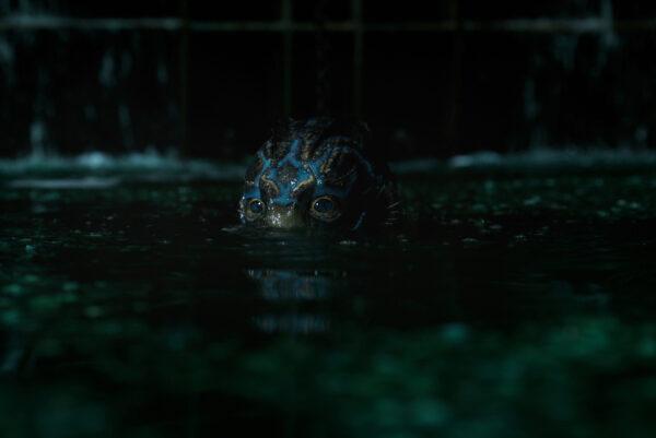 la-forma-dell'acqua-cinefilo-pigro